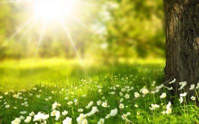 Panele słoneczne – ciąg dalszy historii … (część druga)