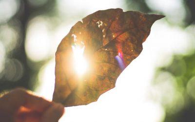 Panele słoneczne – ciąg dalszy historii … (część pierwsza)